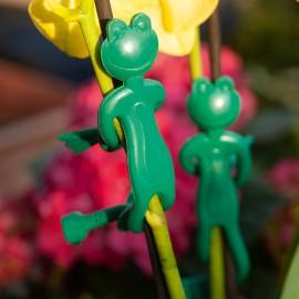 Növényfogó békák